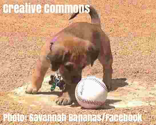 Free 2-page printable mini-lesson on an abandoned puppy who got a job at a baseball club.