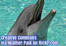 Free 2-page printable mini-lesson on dolphins having a language that may have grammar.