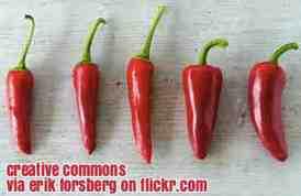 Free 2-page printable mini-lesson on a report that says eating chili peppers helps you live longer.