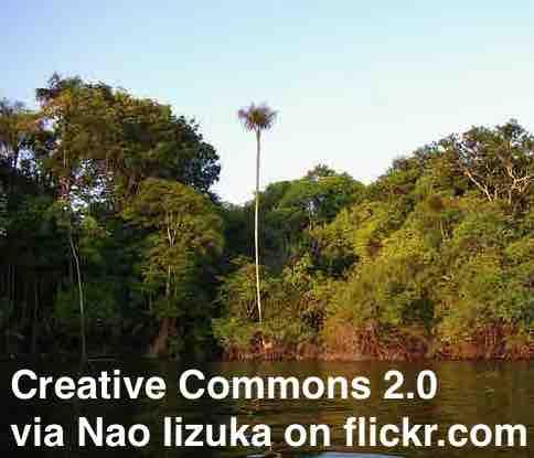 the Amazon fires - ESL Lesson Plan - Breaking News English